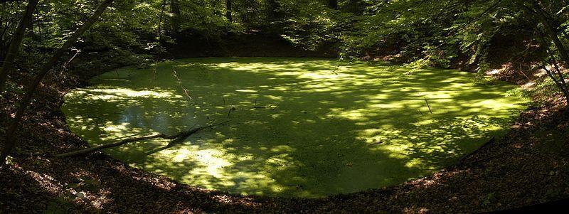 Wypełniony wodą krater Morasko w woj. wielkopolskim (Szczureq/Wikipedia - CC BY-SA 4.0)