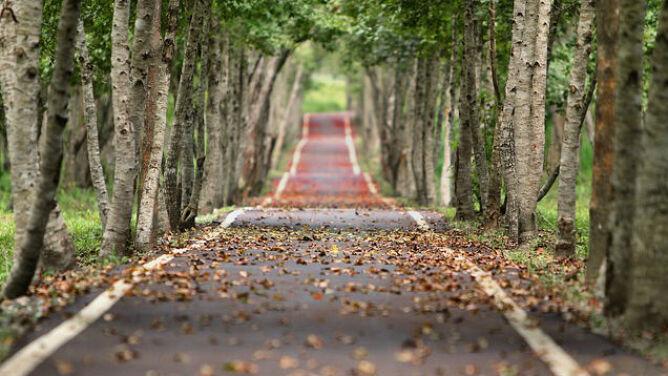 Uwaga na jesienne liście na mokrej drodze